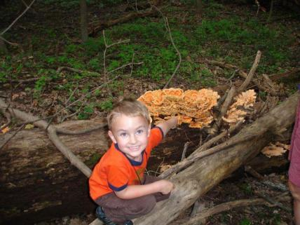 Young mycologist